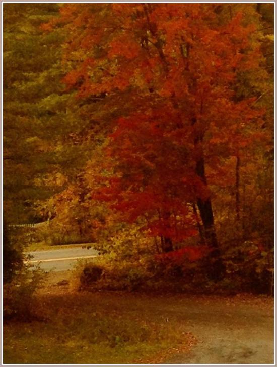 Bent Road Autumn-001