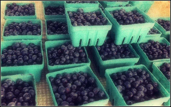 Blueberries at Market with Border