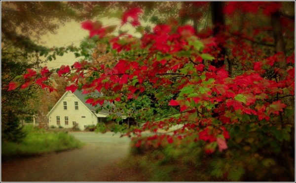 Farmhouse and Autumn Leaves by Dena T Bray