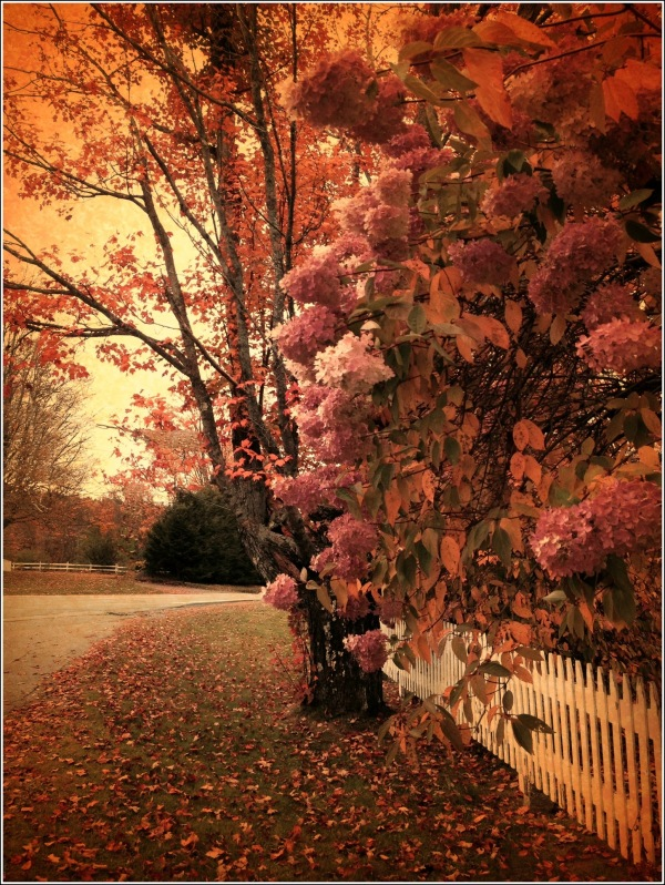 Flowers and Tree on Fence by Dena T Bray