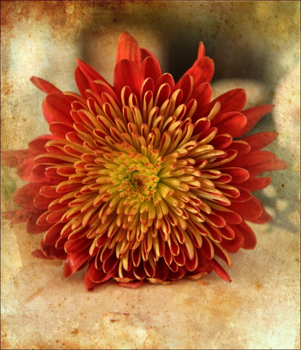 Red Flower with Ancient Canvas
