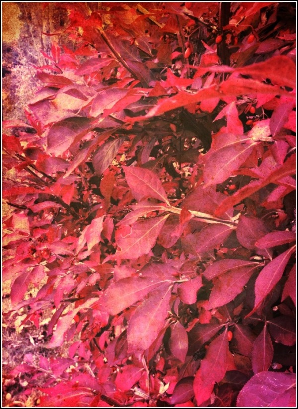 Red, Pink and Gold Leaves by Dena T Bray