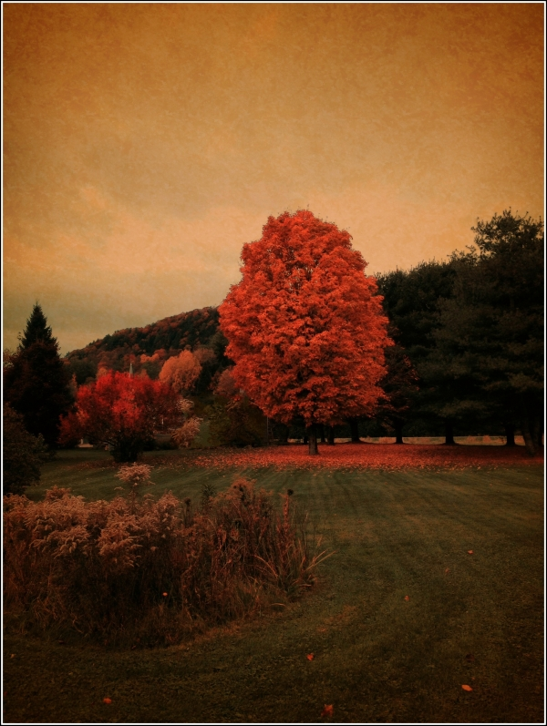 Red Tree in Field by Dena T Bray