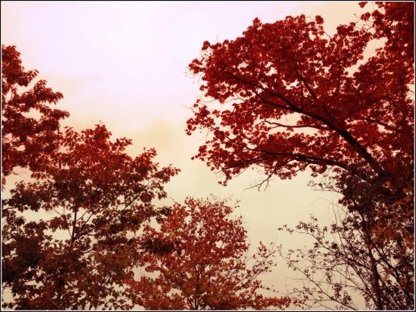 Trees At Dusk by Dena T Bray