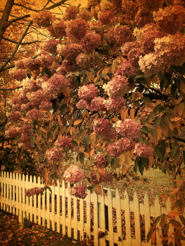 Vintage Flowers on Fence by Dena T Bray