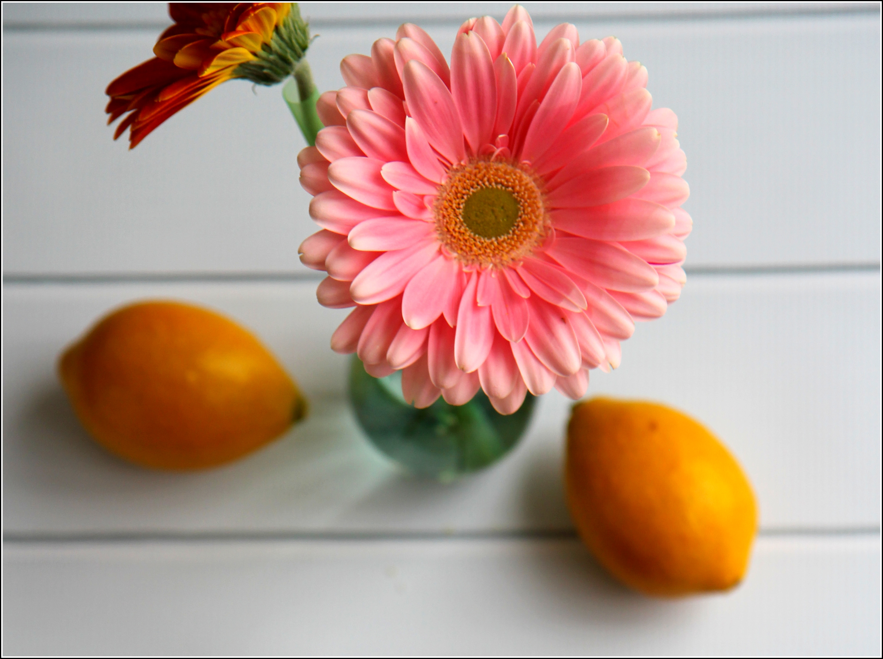 Pink Daisy and Lemons by Dena T BrayⒸ