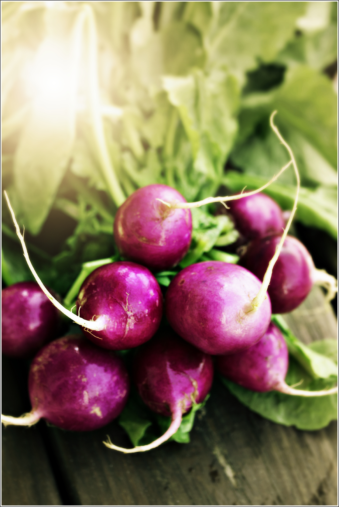 Purple Radishes On Wood with Sunlight by Dena T Bray©