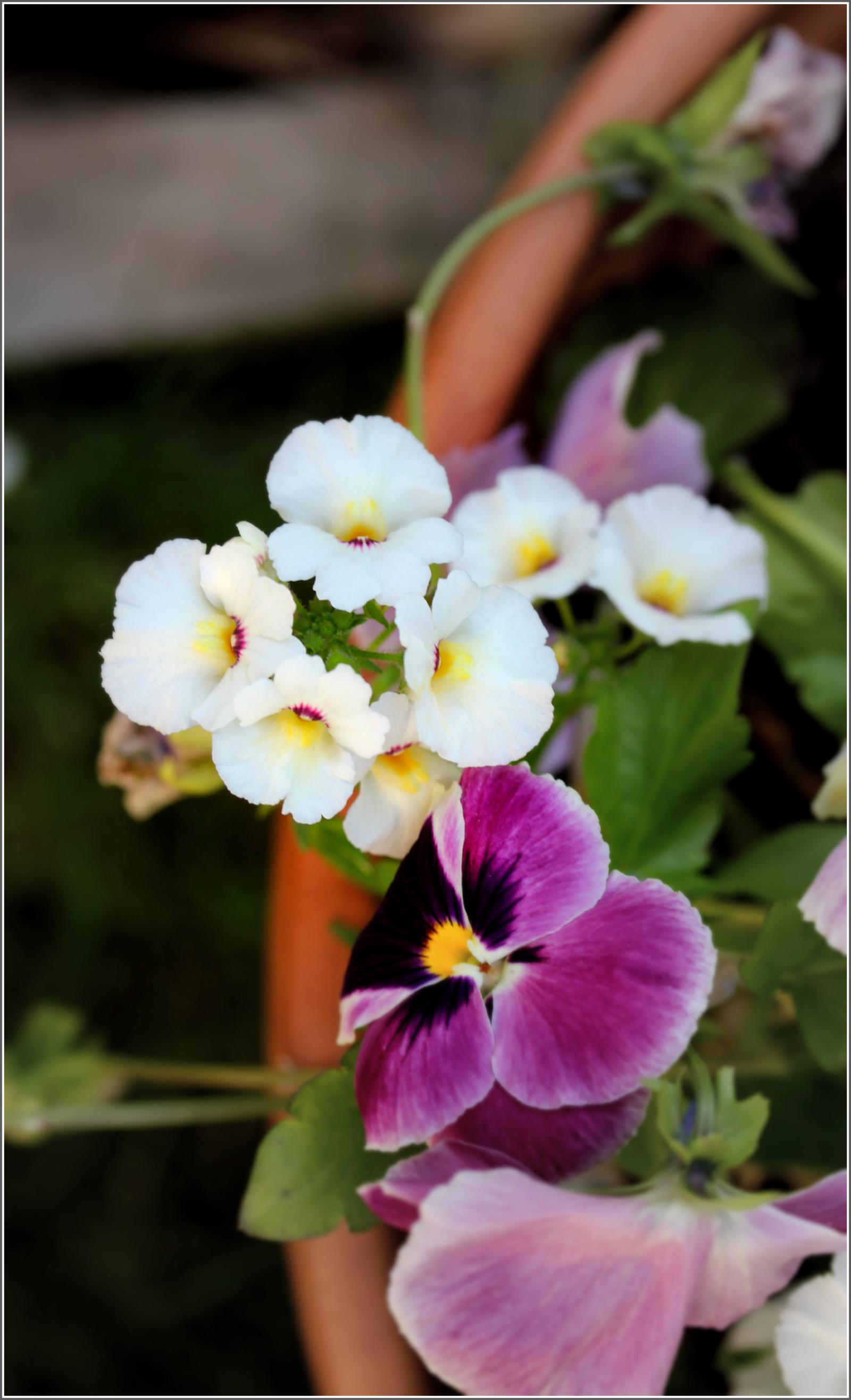 White Flowers in Basket by Dena T Bray©