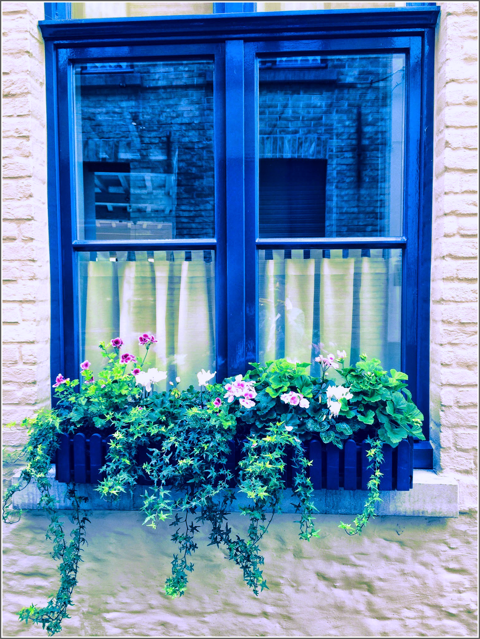 Bruges Window Box 1 Dena T Bray©