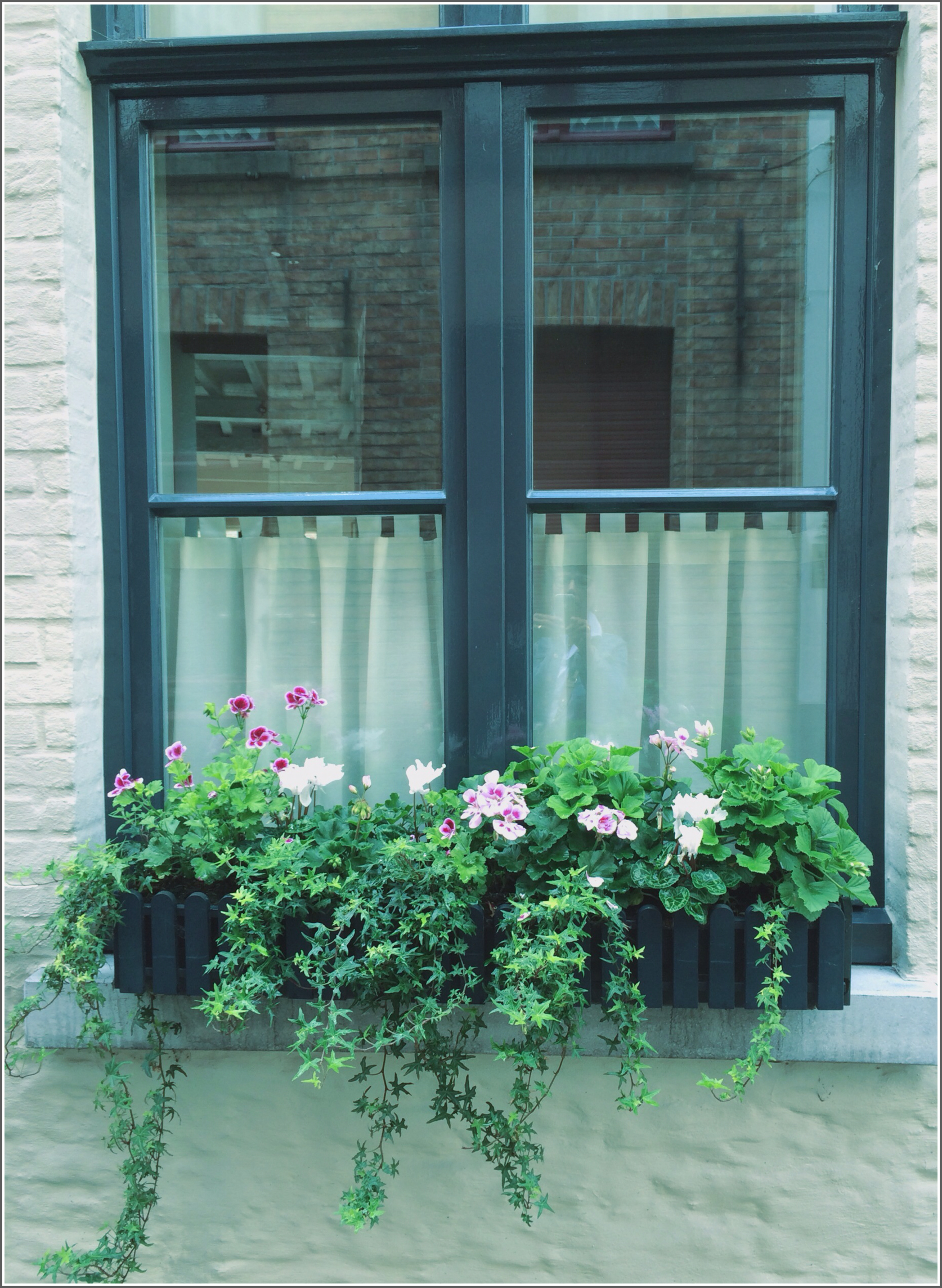Bruges Window Box by Dena T. Bray