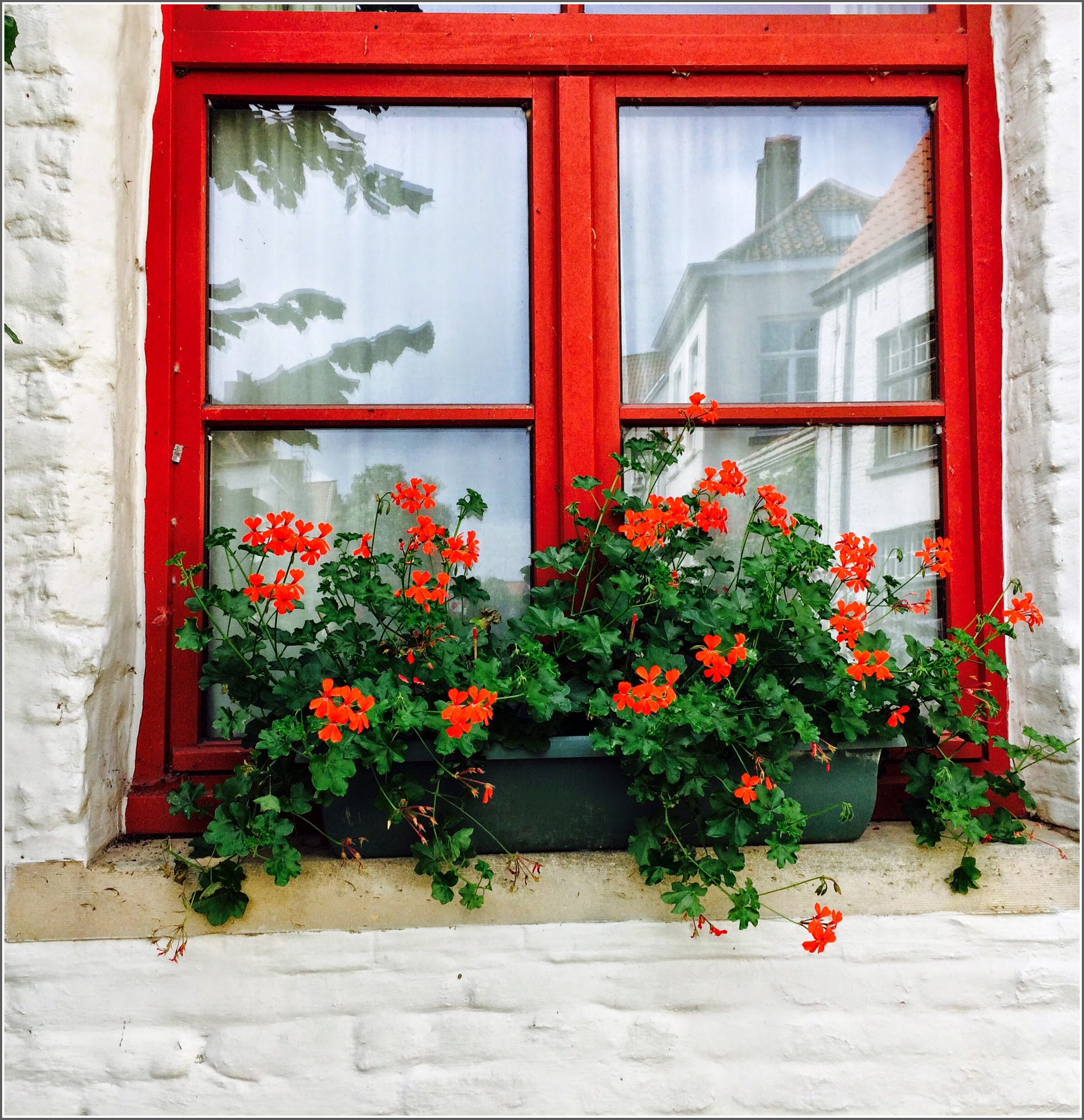 Bruges Window Box with Red by Dena T  Bray