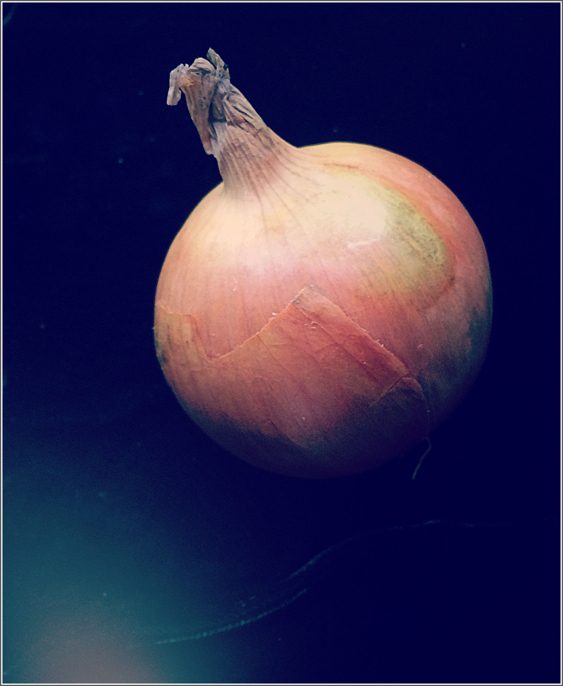 Onion in Evening Light by Dena T Bray©