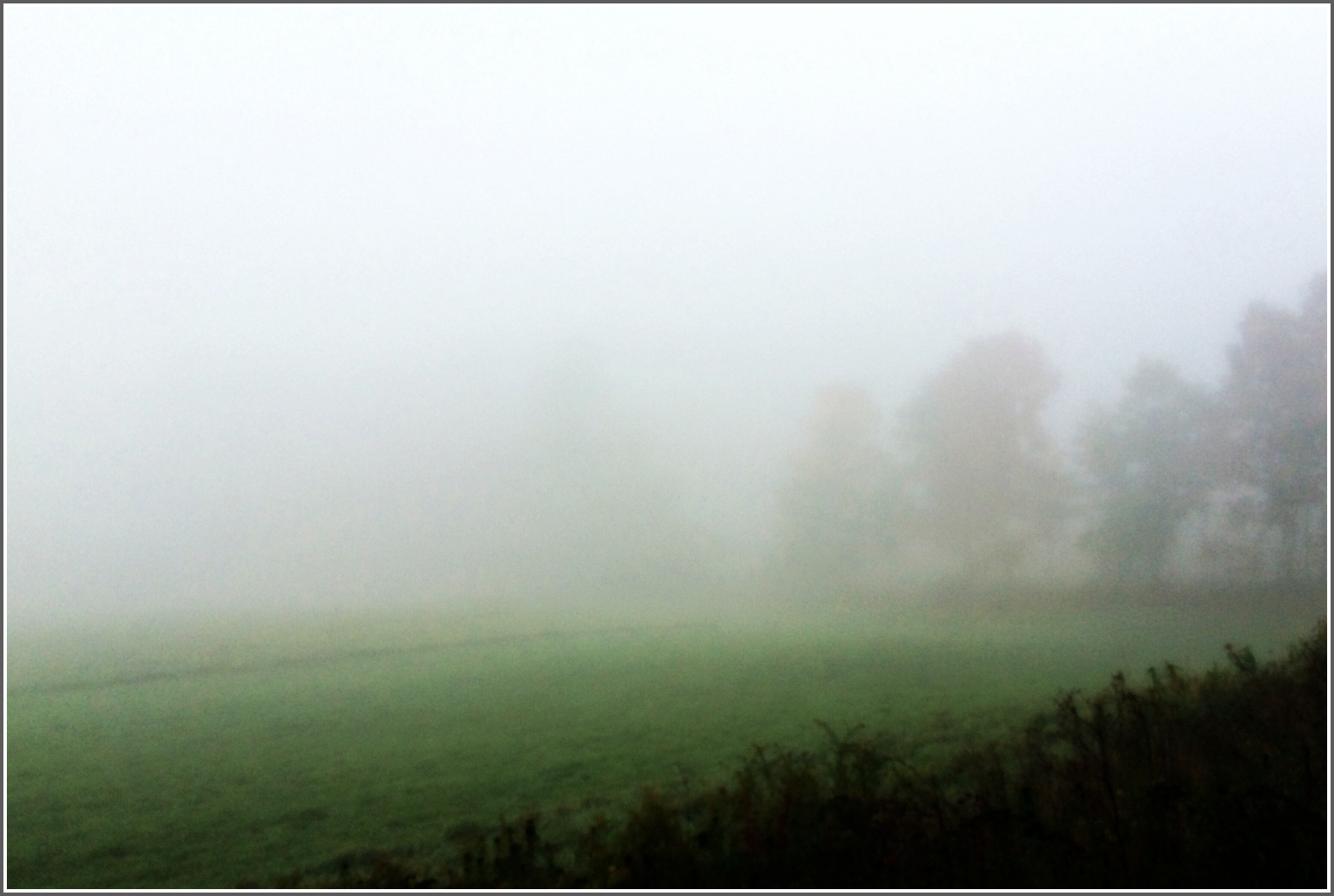 Field in Mist by Dena T BrayⒸ