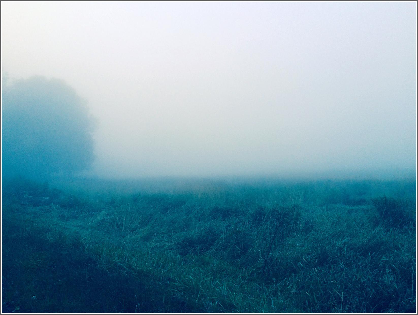 Hayfield in Morning Mist by Dena T BrayⒸ