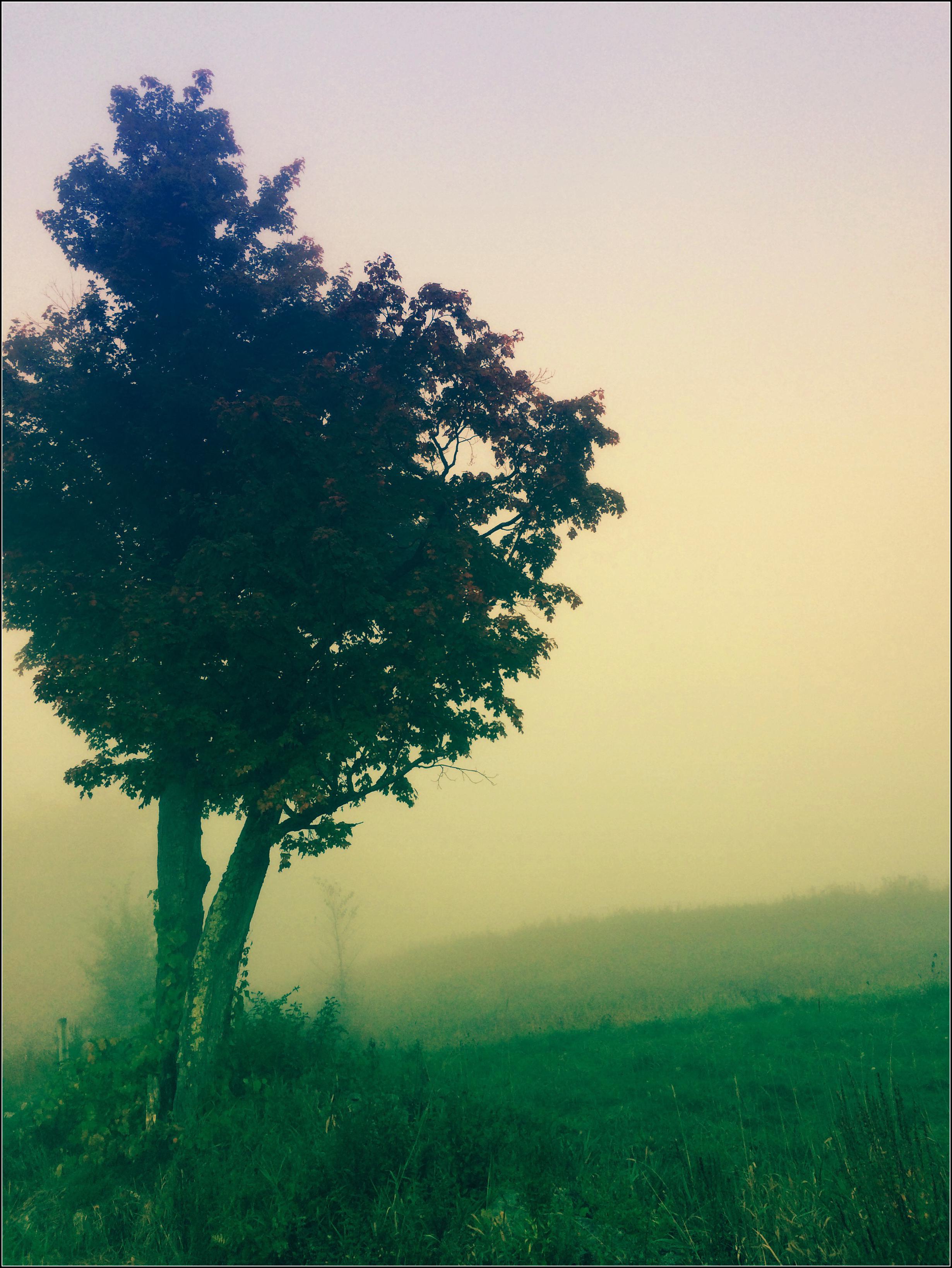 Lonely Tree, by Dena T BrayⒸ