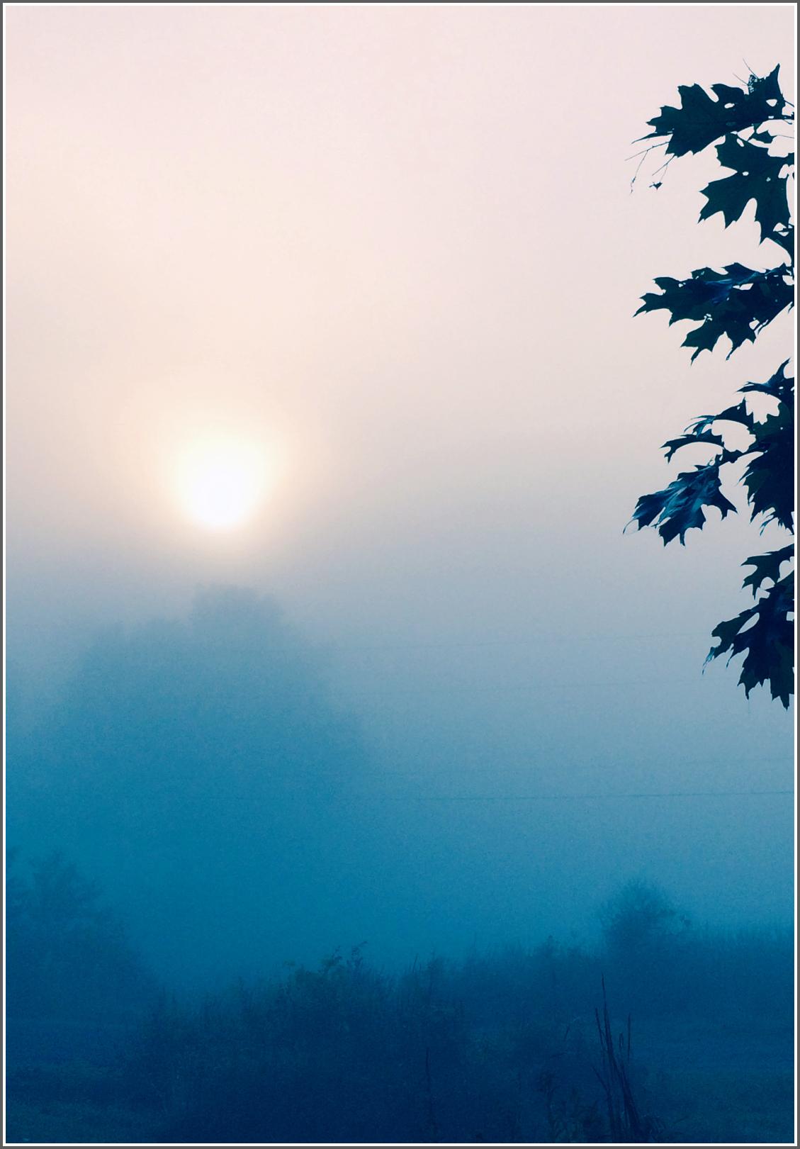 Sunrise Thru The Mist by Dena T BrayⒸ